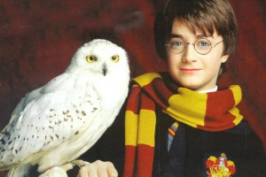 407854-harry-potter-harry-and-hedwig