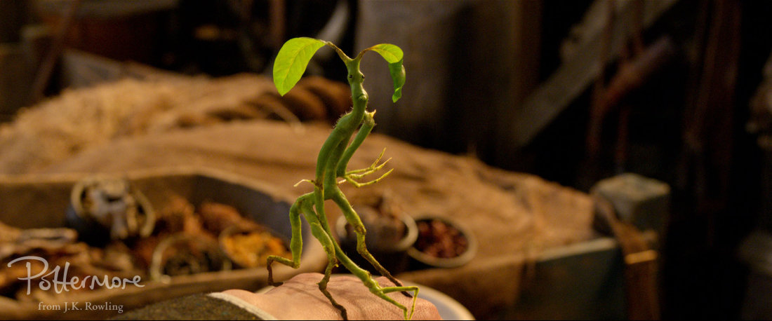 FB1_Newt_featurette_WM_Bowtruckle_raspberry