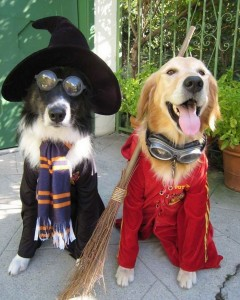 Pets-dressed-up-for-Halloween