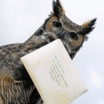 ERROL THE OWL WHICH DELIVERED A LETTER TO HARRY POTTER IN THE FIRST FILM..(BUCHAN/BROWN)