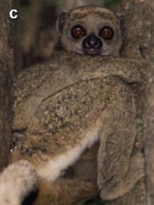Primat7
