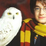 harry-potter-harry-and-hedwig