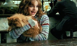 hermione-crookshanks-cat