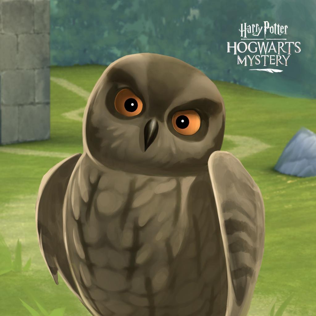 HPHM_Pets_Owl_Scops